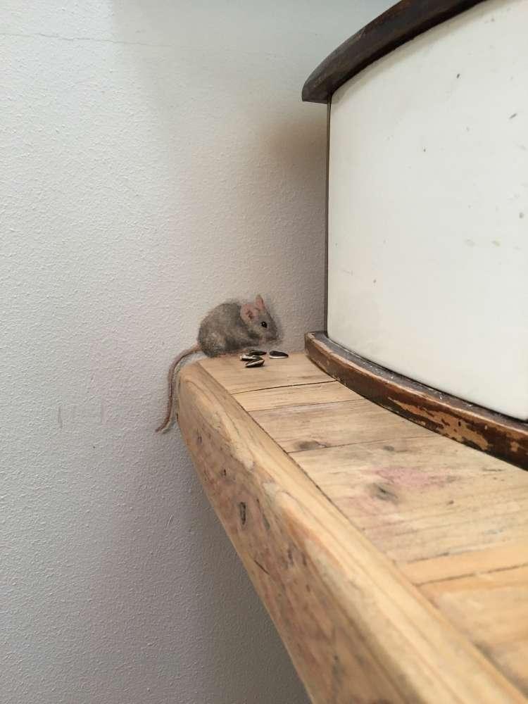 Klein muisje bij de broodtrommel